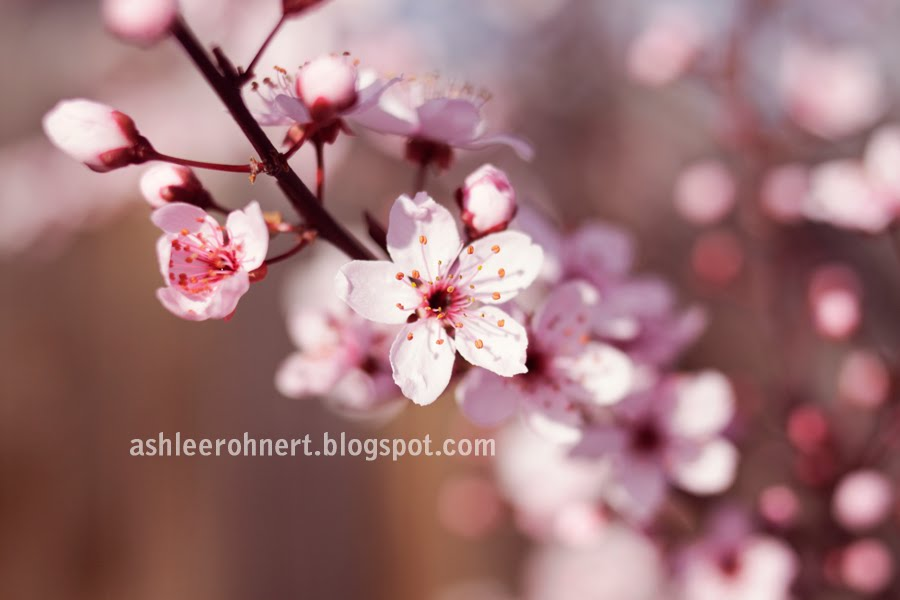 Quotes About Friendship Blossoming Into Love : Blossom and friends quotes quotesgram