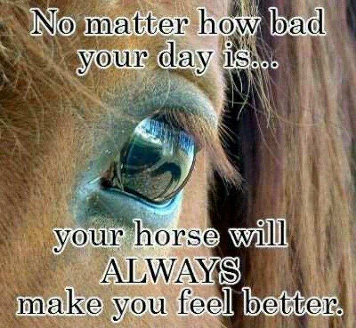 Happy Horse Quotes Quotesgram