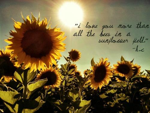 Sunflower Christian Quotes. QuotesGram