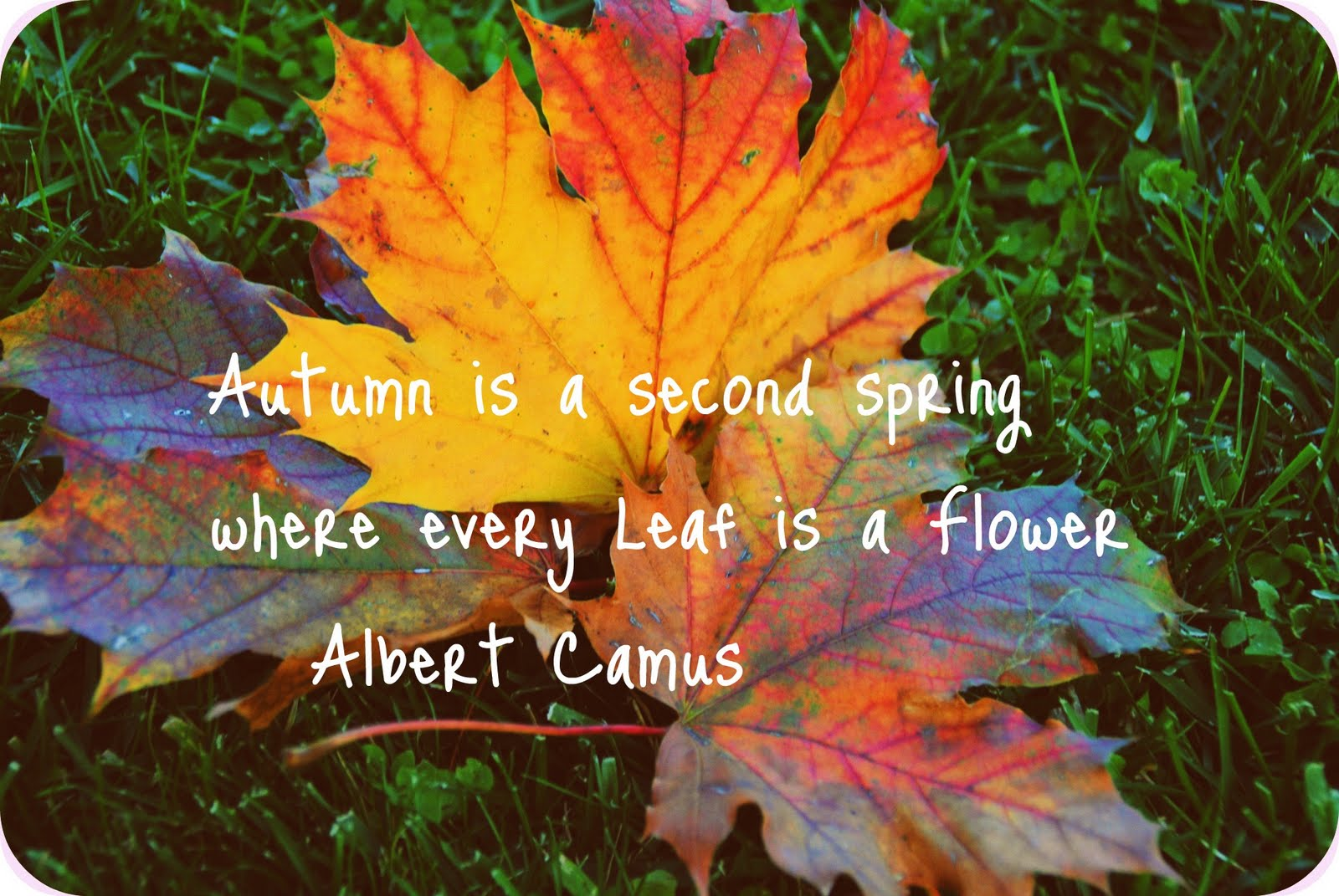 October Fall Quotes Quotesgram