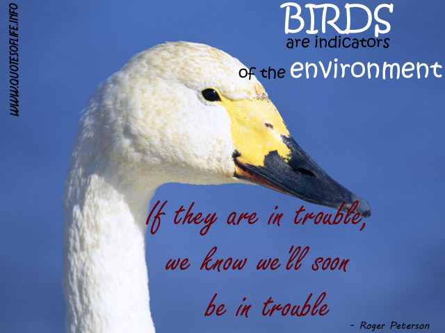 Quotes About Love And Birds Quotesgram: Bird Related Quotes. QuotesGram