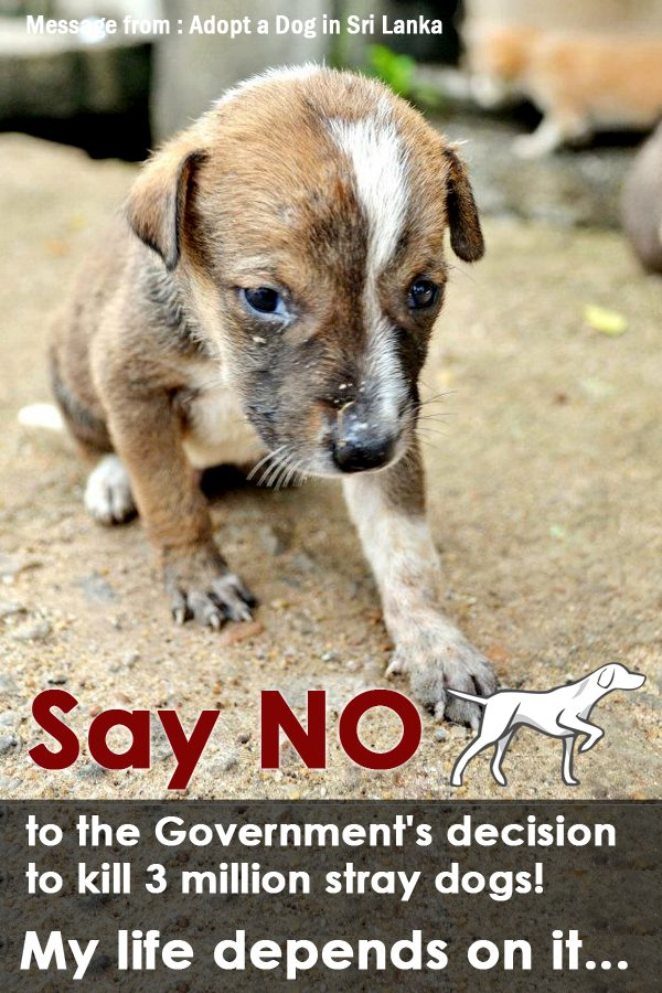 Save The Animals Quotes Quotesgram