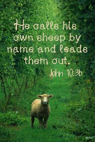 Bible Quotes About Sheep Quotesgram