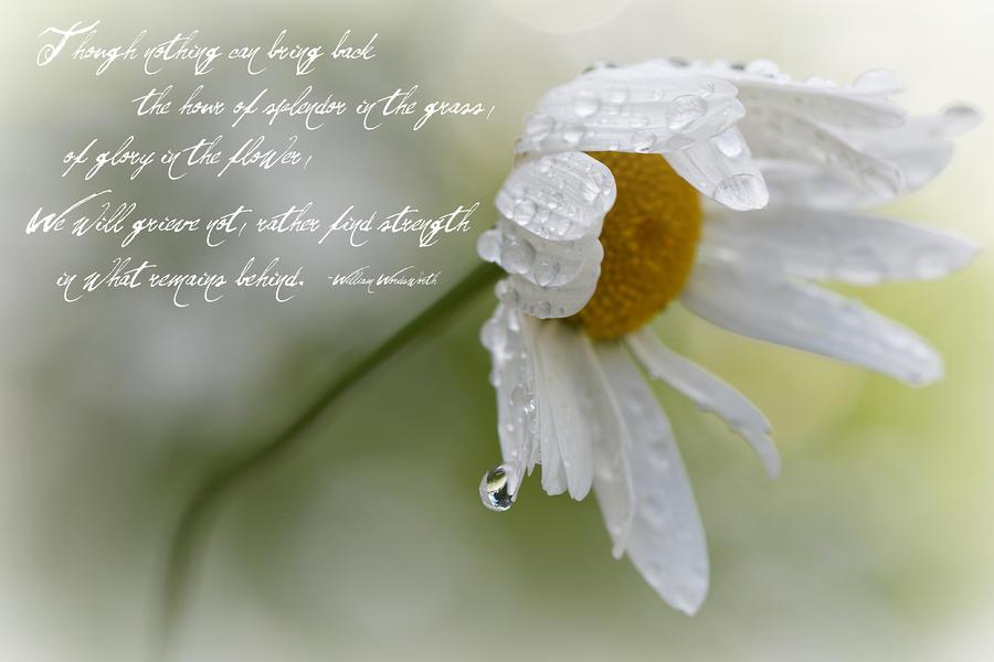 Buddhist Condolence Quotes Quotesgram