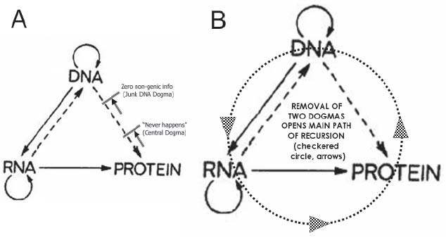 Dna Quotes And Sayings: Dna Structure Quotes. QuotesGram