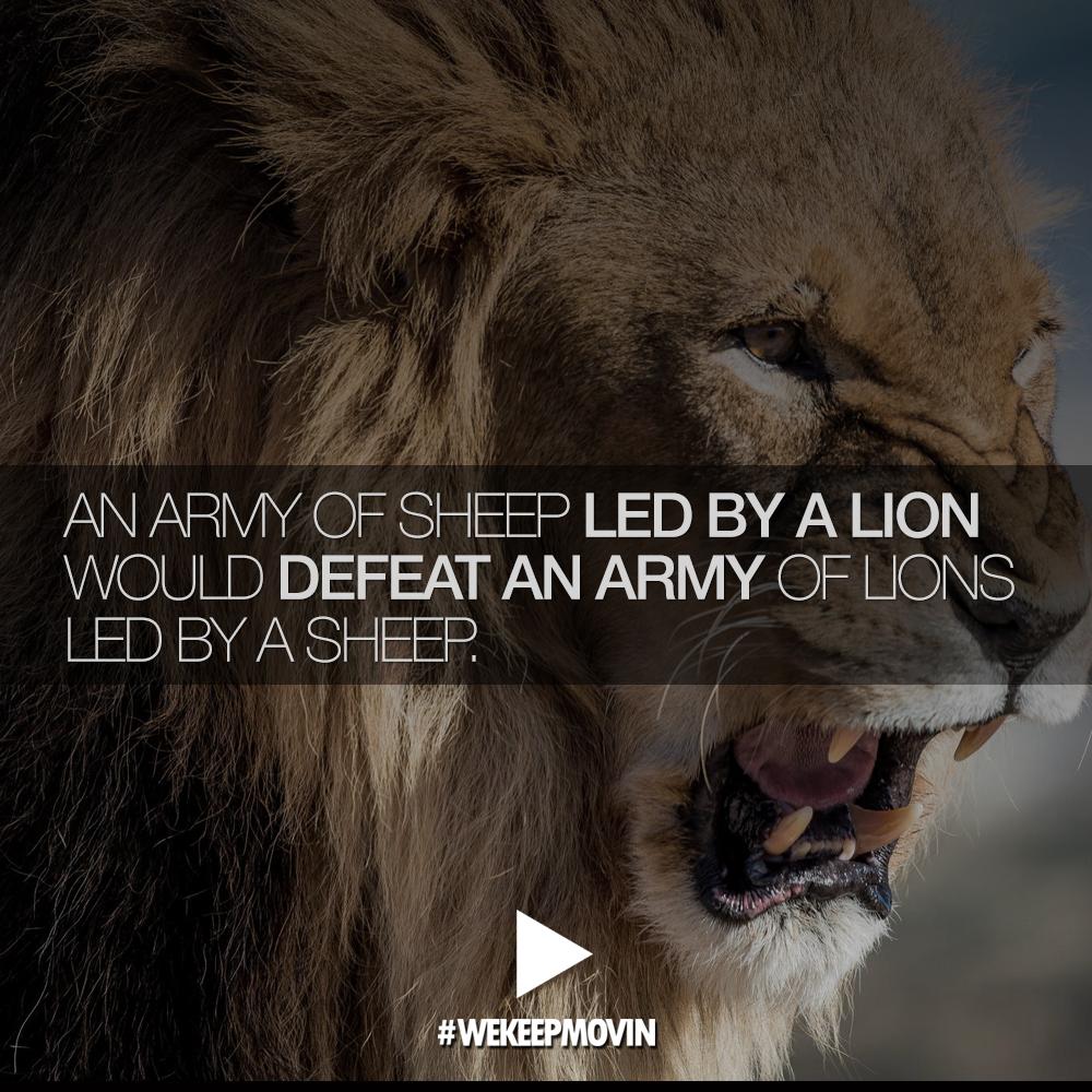 Lion Sheep Quote: Lion Military Quotes. QuotesGram
