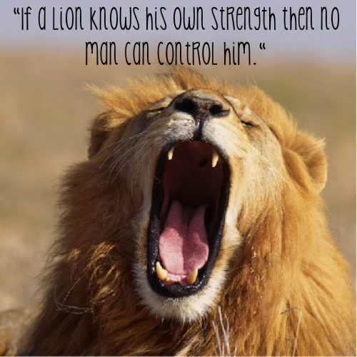 Motivational Quotes Lion And Sheep. QuotesGram