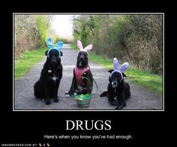 Drugs Dogs Can Take
