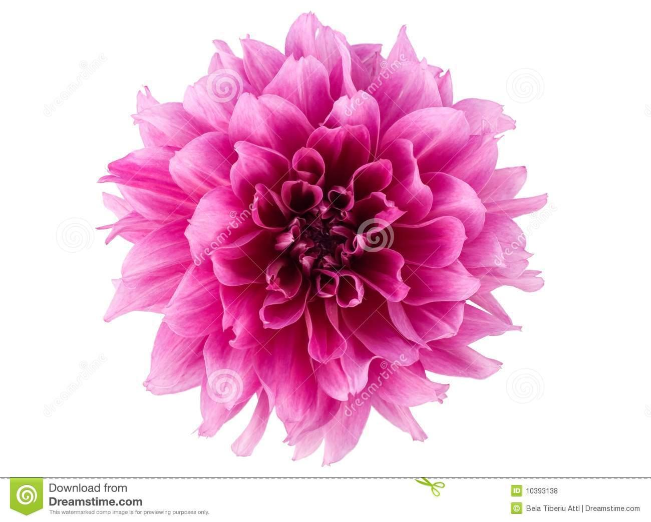 Peony Flower Quotes QuotesGram