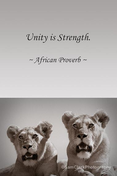 animal inspirational quotes  quotesgram