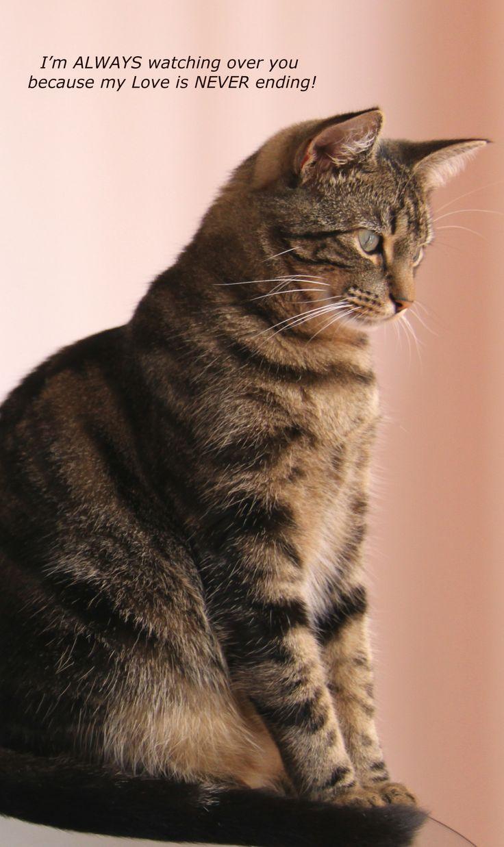 cats pasing richtige selbstbefriedigung