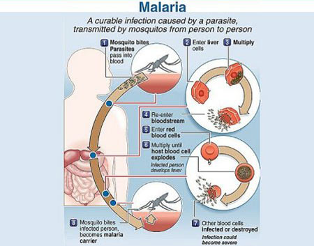 Drug of malaria
