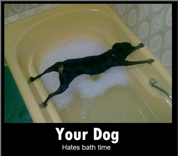 Bath Funny Dog Quotes. QuotesGram