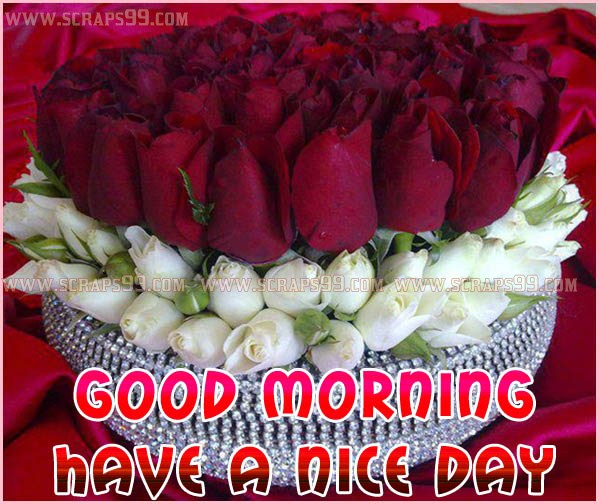 Good Morning Quotes Red Rose : Good morning quotes with roses quotesgram