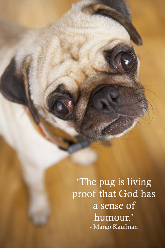 god quotes dogs animal  quotesgram