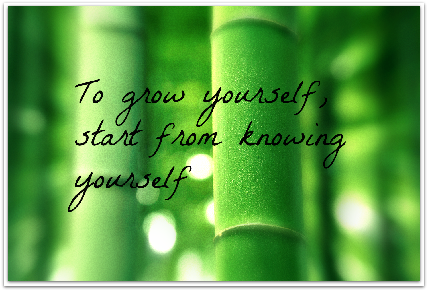 growth personal grow quotes quote development yourself sayings maturity career knowing start self spiritual business quotesgram bamboo hello december famous