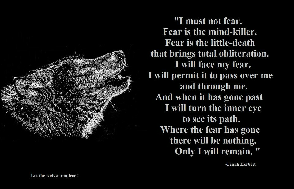 Inspirational Wolf Quotes. QuotesGram