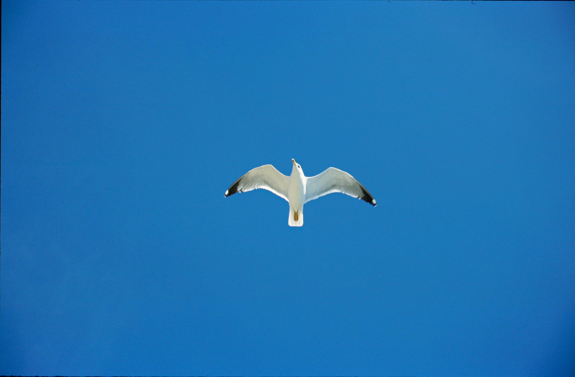 Jonathan Livingston Seagull Quotes Quotesgram