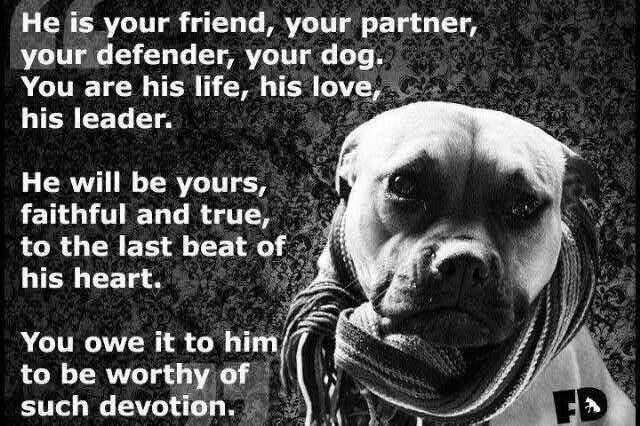 Positive Pitbull Dog Quotes. QuotesGram