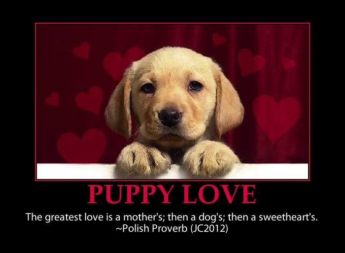 Puppy Love Quotes And Sayings QuotesGram