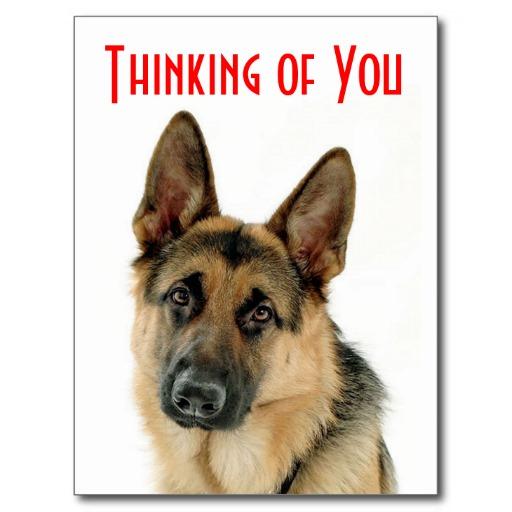 Funny Dog Video German Shepherd