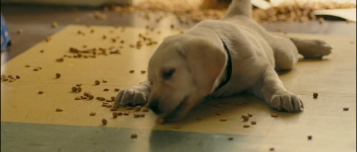 Marley And Me Dog Quotes. QuotesGram  Marley And Me D...