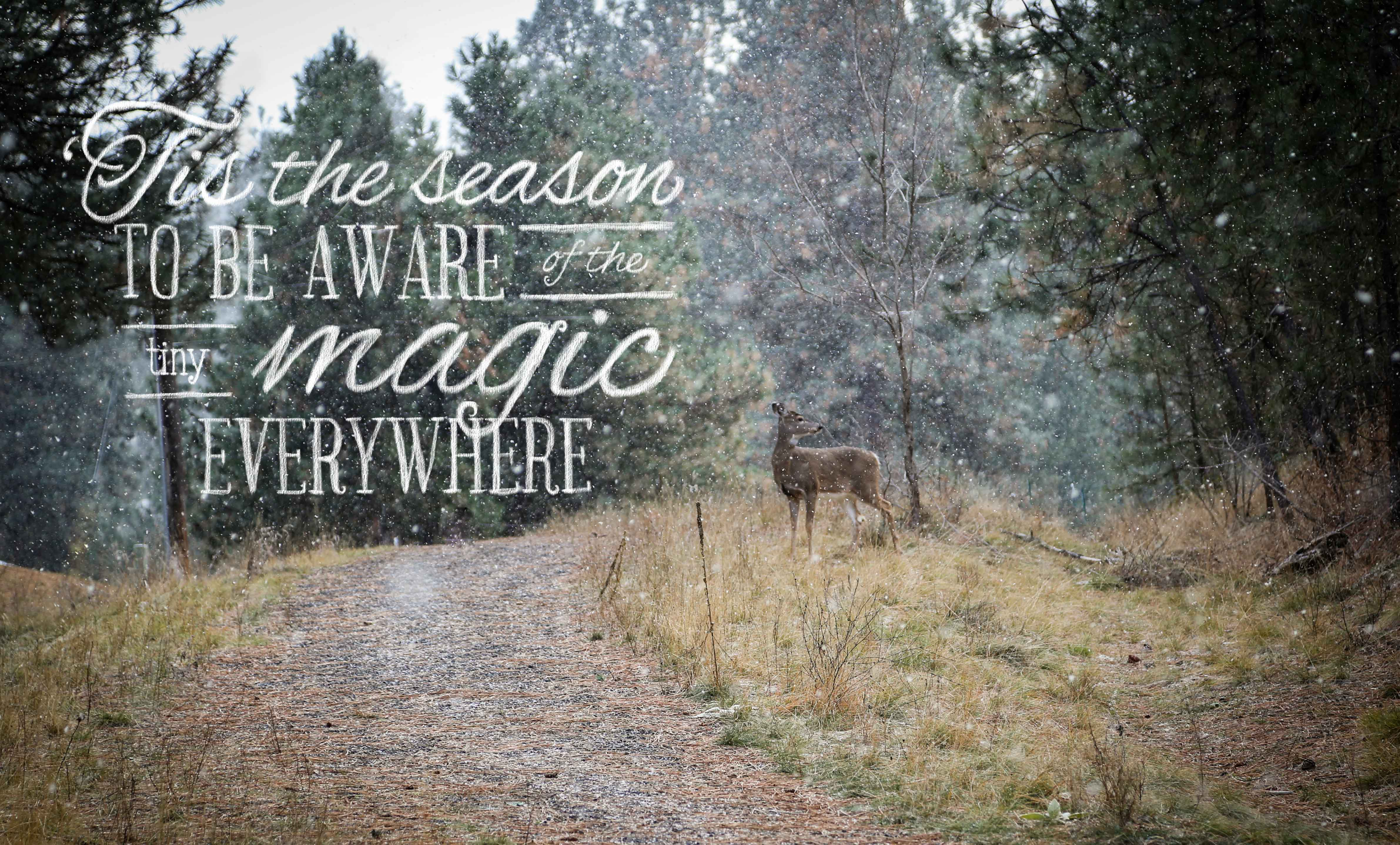Quotes About Deer Wallpapers. QuotesGram