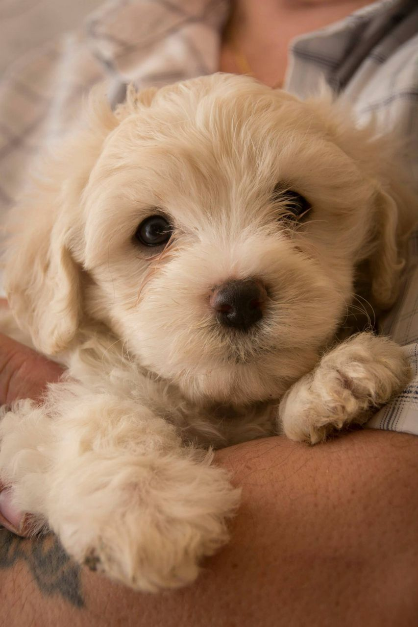 Fluffy Puppies And Quotes Quotesgram