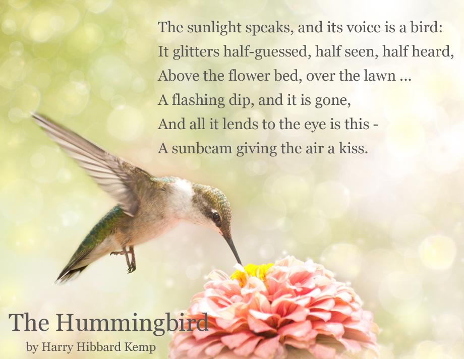 hummingbird poems and quotes quotesgram