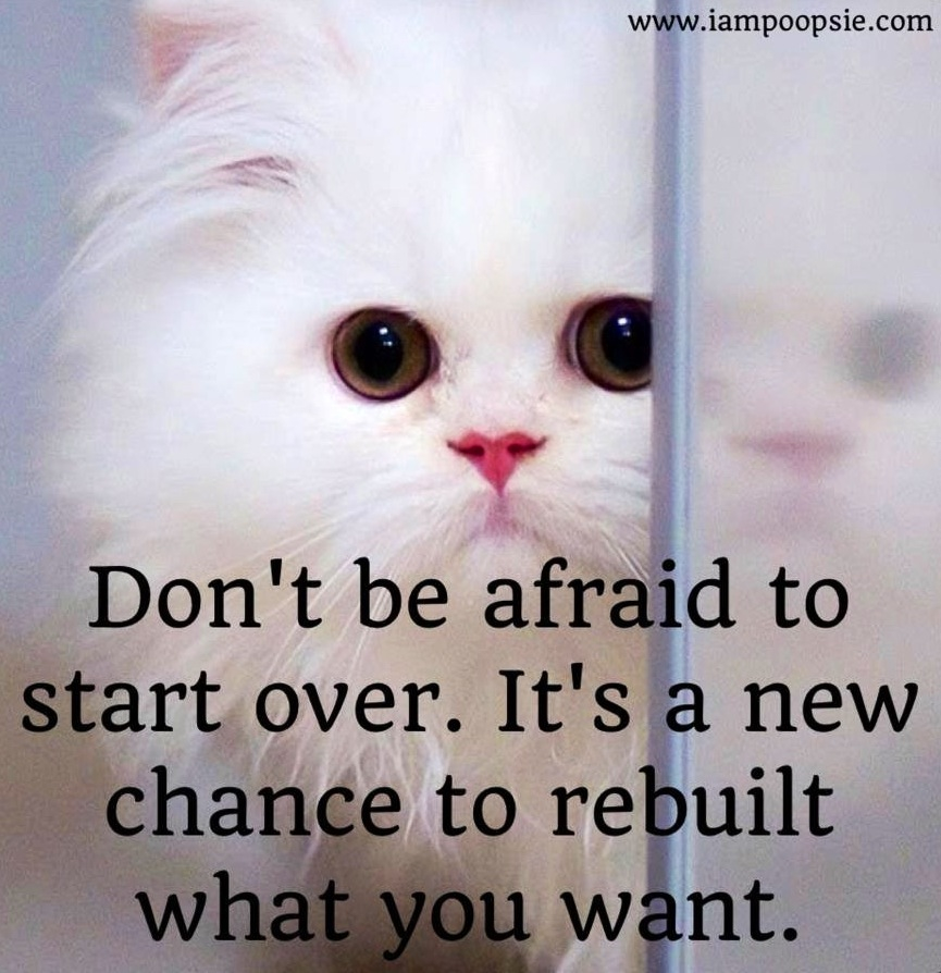 Inspirational Quotes About Failure: Funny Quotes About Starting Over. QuotesGram