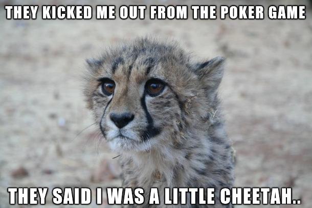 Baby Cheetah Quotes Quotesgram