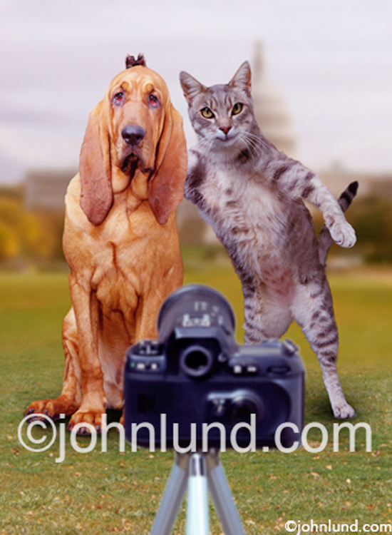 Funny Dogs Without Words Bloodhound Funny Quote...