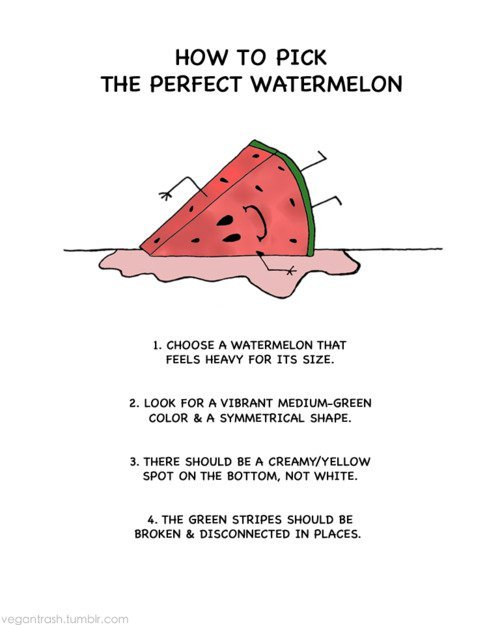 Funny Quotes About Watermelon Quotesgram