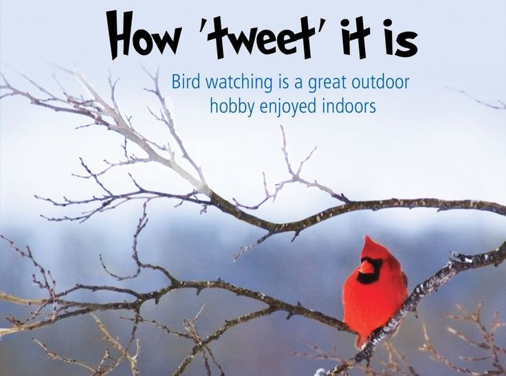 Quotes About Love And Birds Quotesgram: Quotes About Bird Watching. QuotesGram