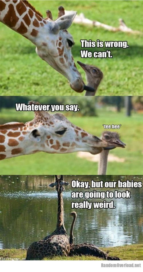 ostrich funny image quotes quotesgram