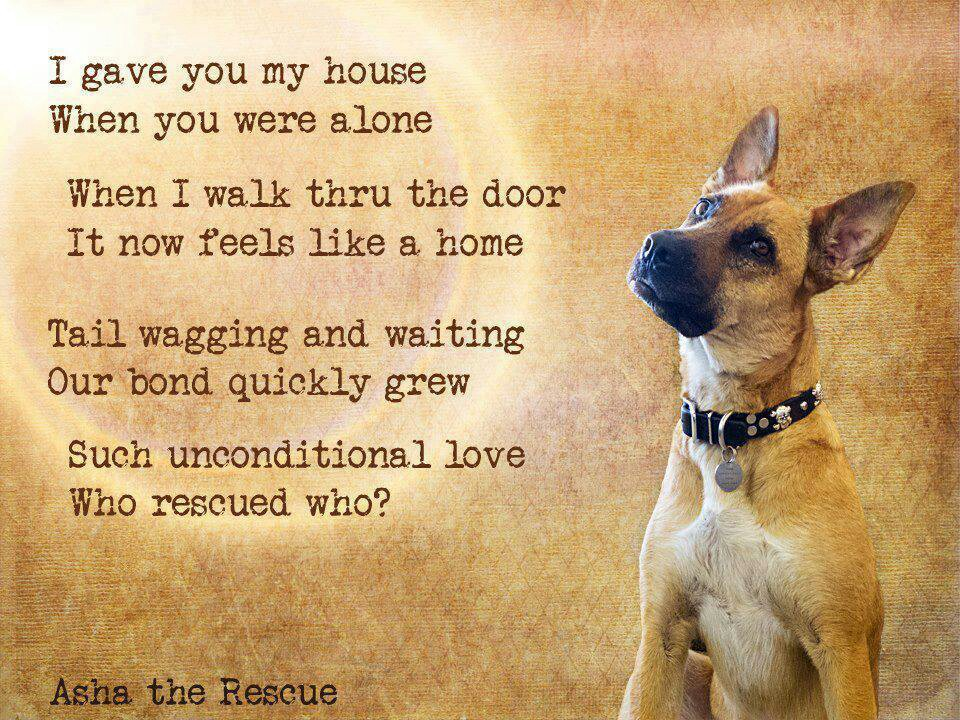When A Dog Dies Quotes Quotesgram: Rescue Dog Poems And Quotes. QuotesGram