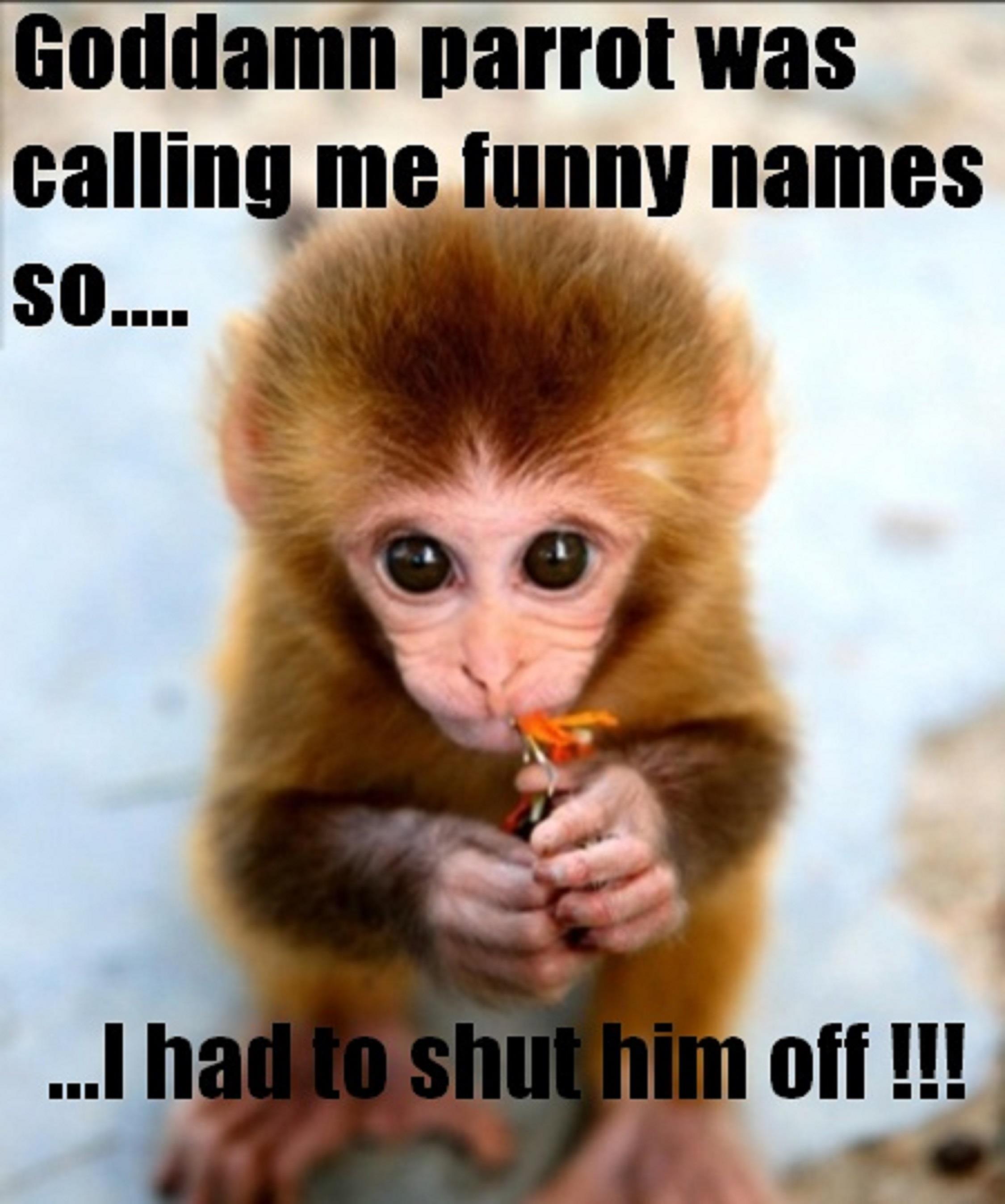 Baby Monkey Quotes. QuotesGram