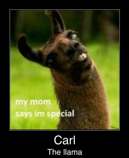 Llamas Quotes Inspirational: Carl The Llama Quotes. QuotesGram