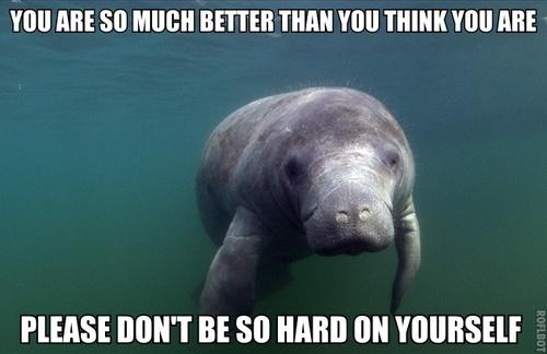 Funny Manatee Meme : Funny manatee quotes quotesgram