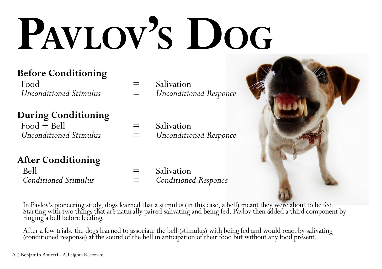 In The Conditioning For Pavlov S Dog