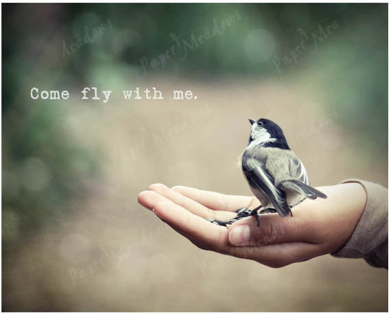 Quotes About Love And Birds Quotesgram: Quotes About Birds Flying. QuotesGram