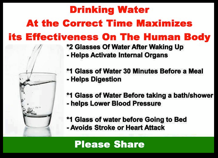 the human body and water dehydration essay
