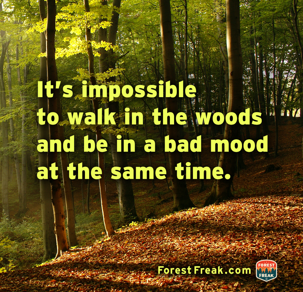 Forest Quotes: Famous Quotes About Forests. QuotesGram