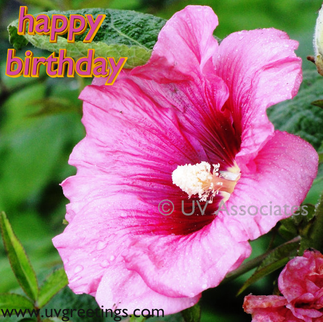 Birthday Flowers Images With Quotes: Birthday Quotes About Flowers. QuotesGram