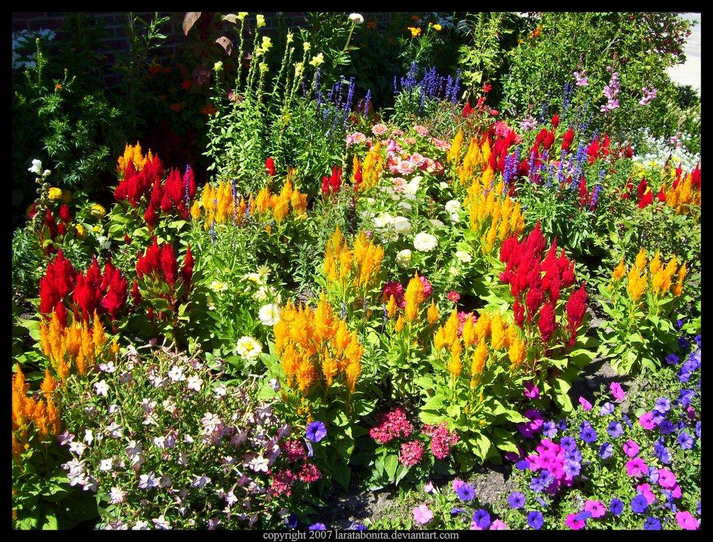 Fall Garden Quotes Quotesgram
