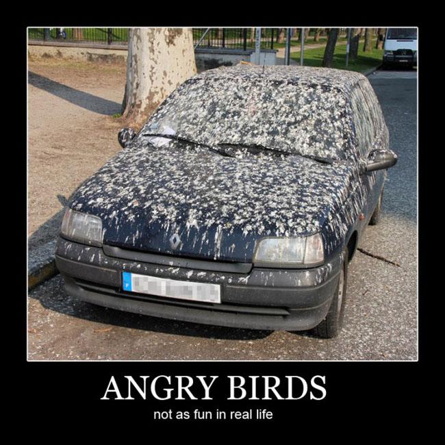 Bird Poop Quotes Quotesgram