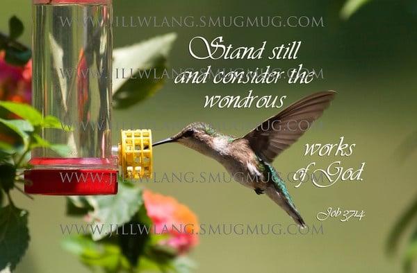 hummingbird quotes quotesgram