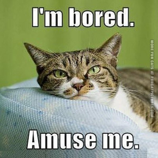 Funny Meme Bored : Im bored quotes funny quotesgram