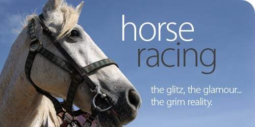 Horse Racing Quotes. QuotesGram