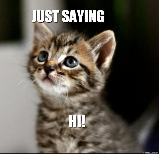 Cute Kittens Saying Hi Quotes. QuotesGram